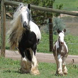 Babydoll and colt