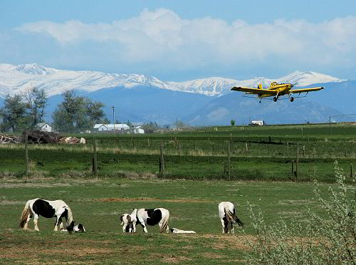crop duster and gypsy horses